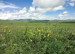 夏のモンゴル