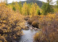 秋のモンゴル